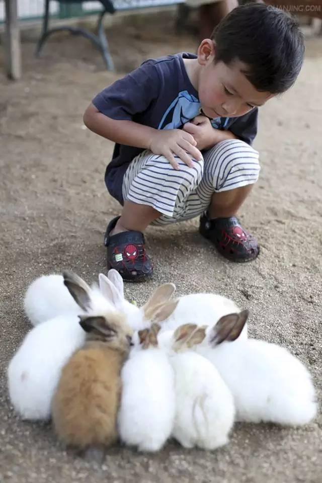 那些小动物小时候不一样
